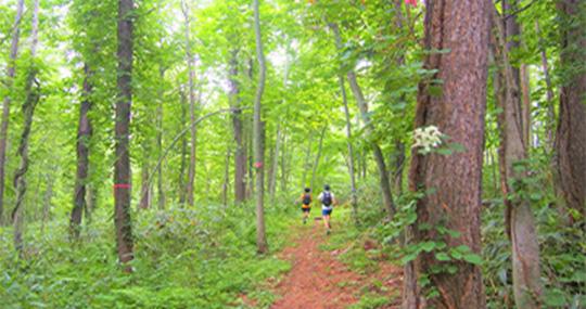 Rusutsu Trail