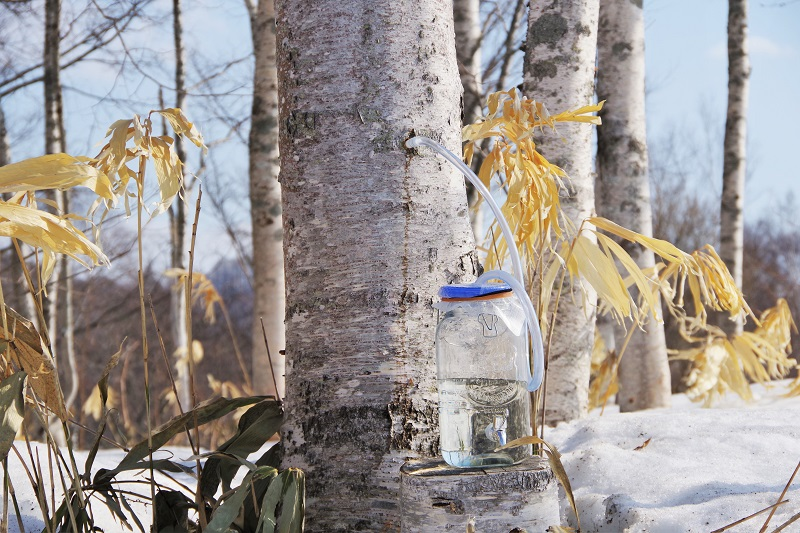 What is  Birch sap !? Try and taste with coffee.