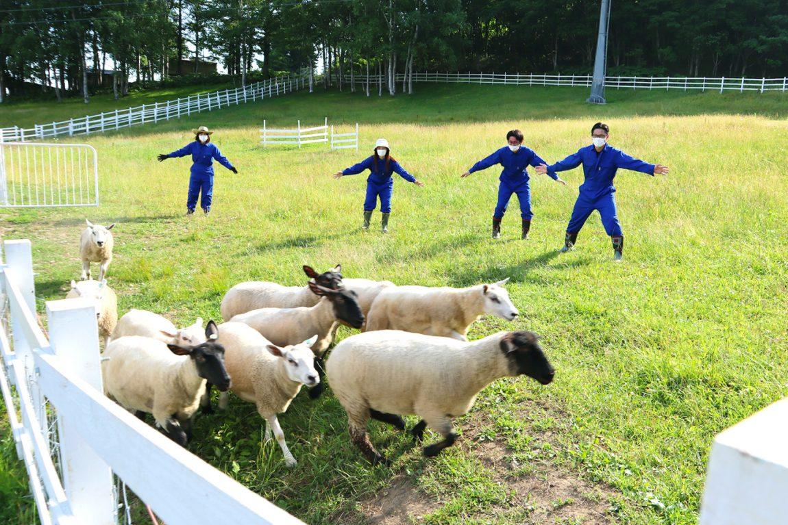 Human Sheepdog Showdown
